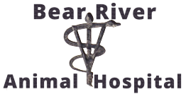 Bear River Animal Hospital